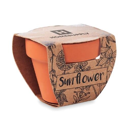 Semi SUNFLOWER - 1