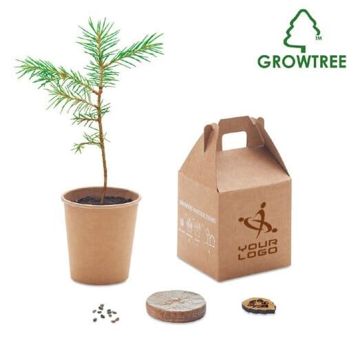 Set in legno di pino GROWTREE KIT